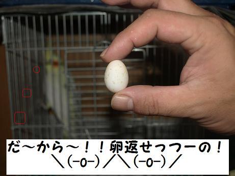 ふわり卵2