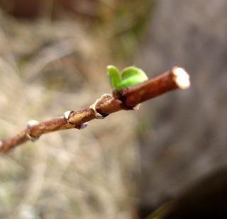 芽が出た♪