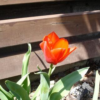 ちょっと花が小さい2年もの。