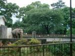 小田原城の本丸は動物園となっています。 天気がいいと(?)象もみられます。