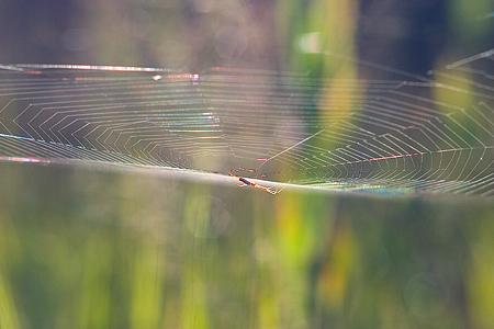 夏の終わりのクモの巣
