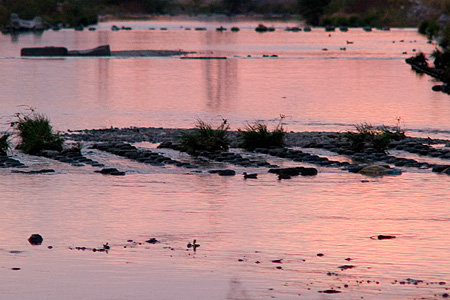カモのいる川風景