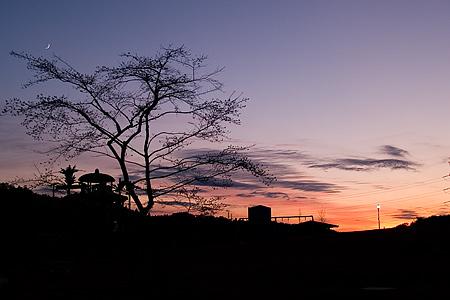 四季桜公園