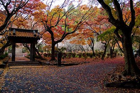 浄源寺の三蔵門落葉