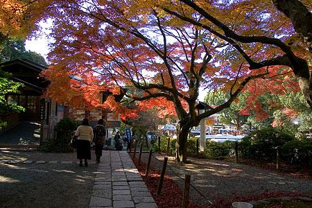 鎌倉こぼれ写真-1
