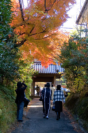 鎌倉こぼれ写真-3