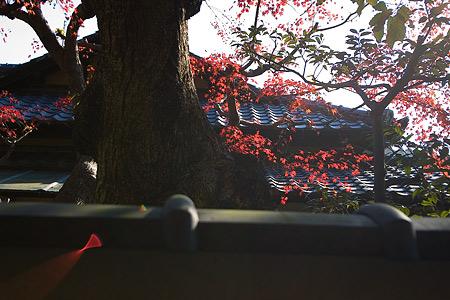 鎌倉こぼれ写真-5