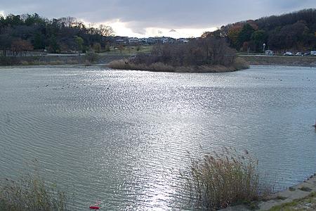天白公園の大根池
