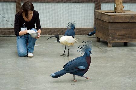 花鳥園1-8