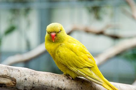 鳥いろいろ-7