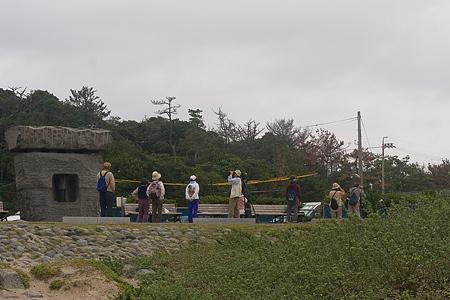 伊良湖のタカ渡り-5