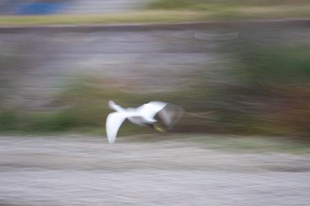 矢田川鳥撮り-4