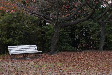 平和公園紅葉始め-7