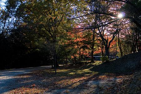 森林公園紅葉前-1