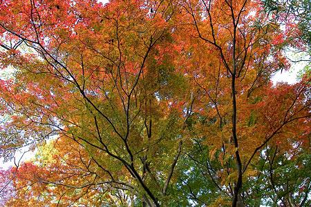 森林公園紅葉前-5