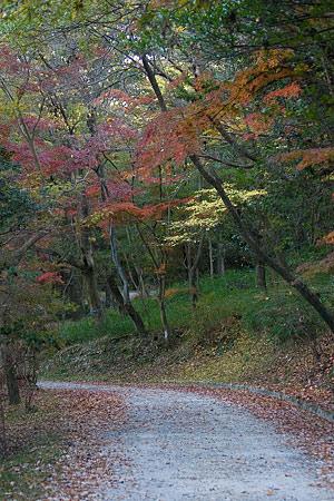 森林公園2-8