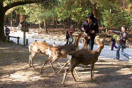 奈良の鹿コレクション-4