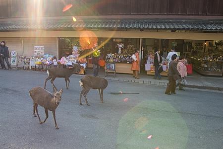 奈良の鹿コレクション-7