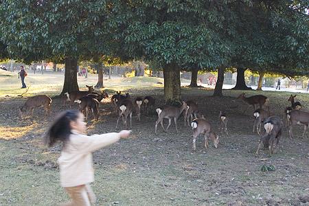 奈良の鹿コレクション-8