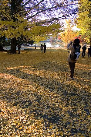 奈良紅葉風景-10