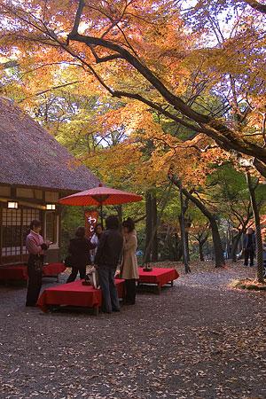 奈良紅葉風景-9