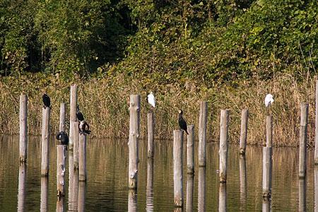 葛西臨海の鳥たち1-1