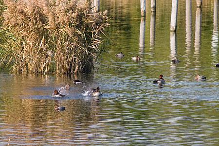 葛西臨海の鳥たち1-2