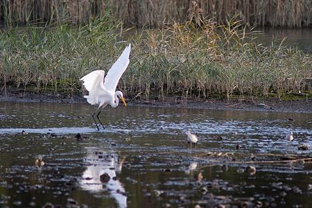 葛西臨海の鳥たち1-3