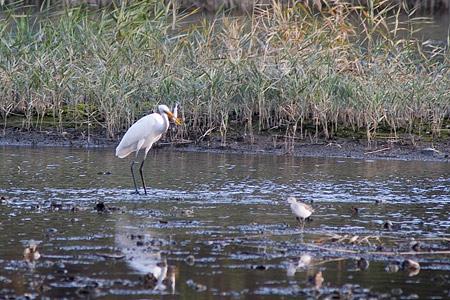 葛西臨海の鳥たち1-4