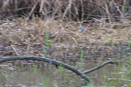 葛西臨海の鳥たち2-2