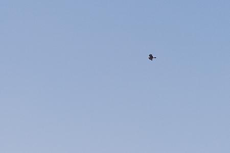 葛西臨海の鳥たち2-3