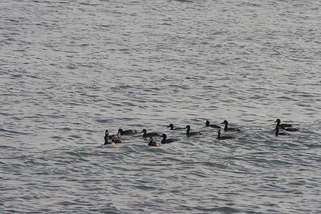 葛西臨海の鳥たち2-5