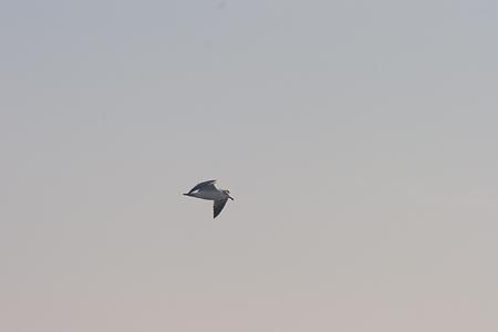 葛西臨海の鳥たち2-8