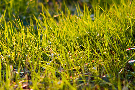 小幡緑地の春色
