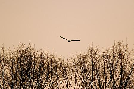 小幡緑地飛び去る鳥