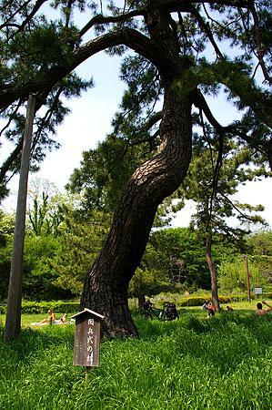 代々木公園風景-6