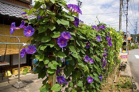田舎の花たち-1