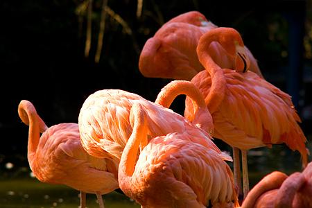 東山の鳥たち-1