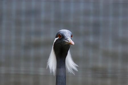 東山の鳥たち-3