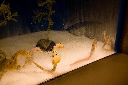 しながわ水族館の魚1-5