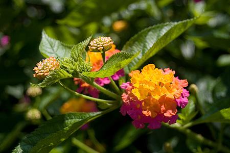 デンパークの花-3