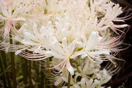 デンパークの花-9