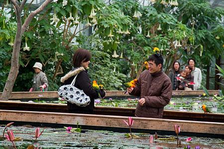 花鳥園と人-9