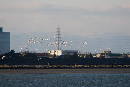 名古屋市野鳥観察館-5