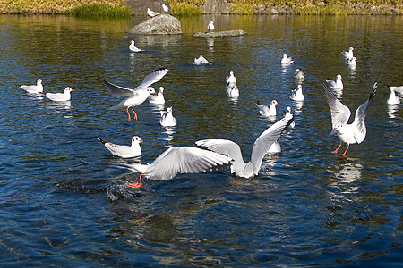白鳥庭園-4