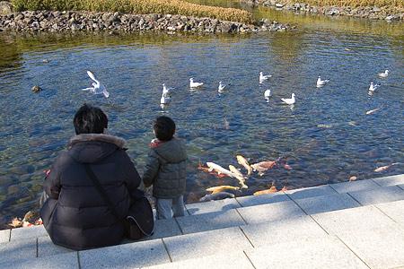 白鳥庭園-6
