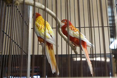 ノアの鳥たち-7