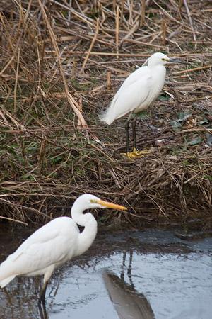 牧野ヶ池の鳥-6