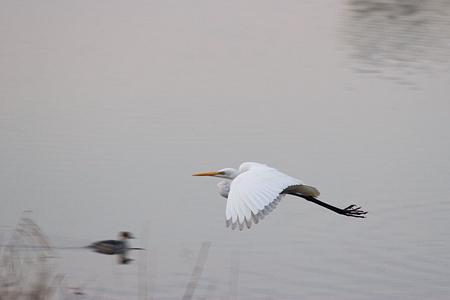 牧野ヶ池の鳥-7