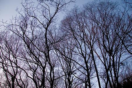 冬の海上の森後-4
